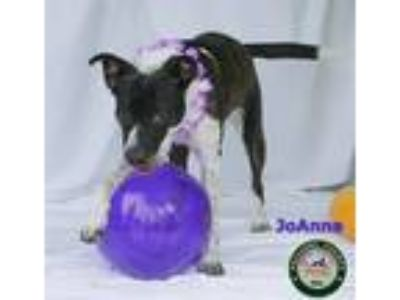 Adopt 19-06-1797 Joanna a Pit Bull Terrier / Mixed dog in Dallas, GA (25585508)