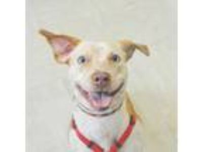 Adopt Lulu a Tan/Yellow/Fawn Mixed Breed (Medium) / Mixed dog in New York
