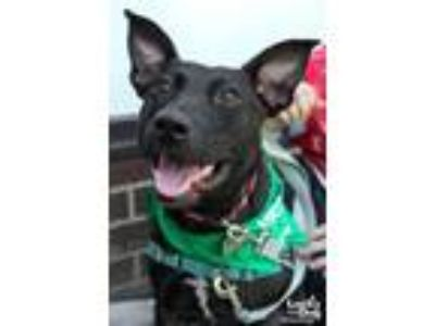 Adopt Olive a Shepherd