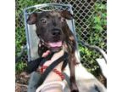 Adopt Elsa a Black Terrier (Unknown Type, Small) / Mixed dog in Wantagh