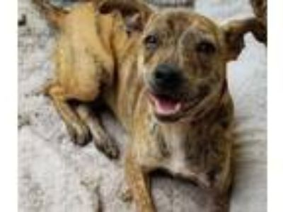 Adopt Holly a Terrier