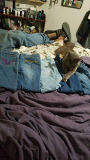 Girls jeans size 10. Price for all 5 pair