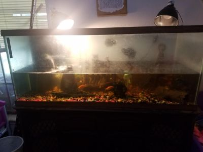 Fish tank,stand, accessories