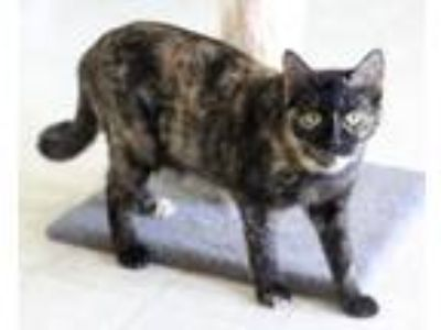 Adopt Mia a Domestic Short Hair