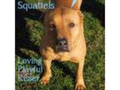 Adopt Squattels a Chow Chow / Hound (Unknown Type) / Mixed dog in Washburn
