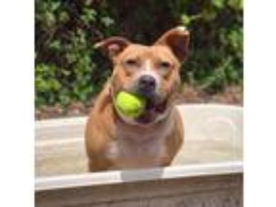 Adopt Lexi Mama a Terrier, Mixed Breed
