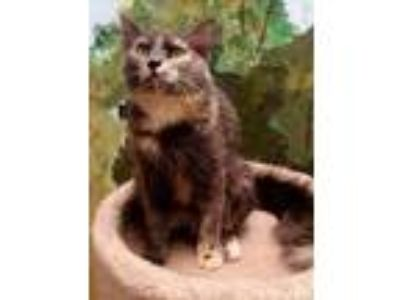 Adopt Londyn a Calico or Dilute Calico Calico (short coat) cat in Huntley