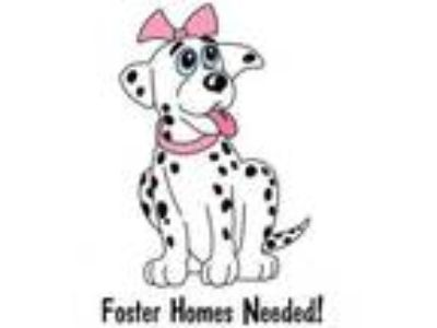 Adopt FOSTER HOMES NEEDED! Save a Life a Terrier, Beagle