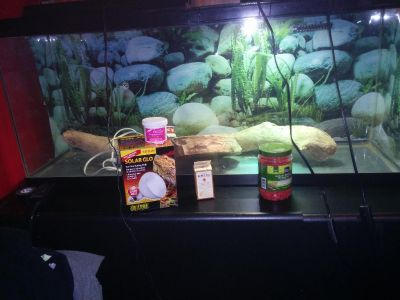 65 Gallon tank with various terrain and equipment for lizards.