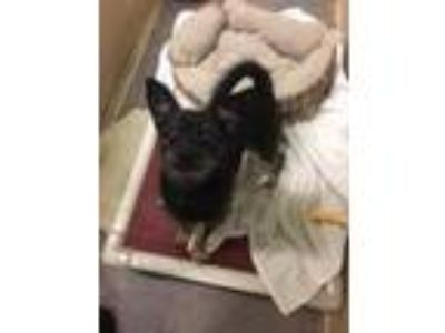 Adopt Prince a Terrier