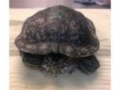 Adopt Garrett a Turtle - Water reptile, amphibian, and/or fish in Monterey