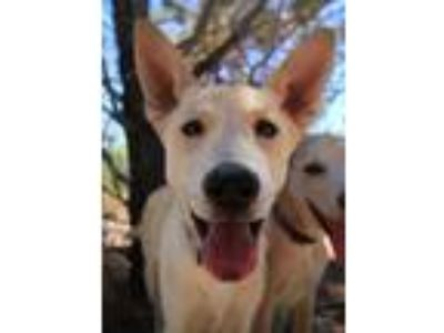 Adopt Mat a Gray/Silver/Salt & Pepper - with White Husky / Shepherd (Unknown