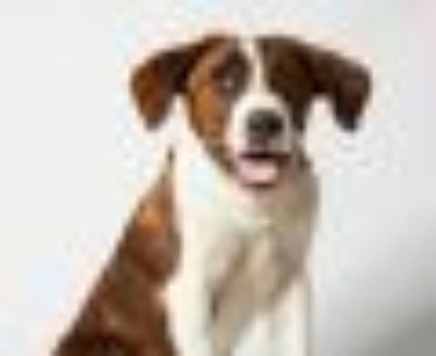 AUGUSTINE Hound Dog