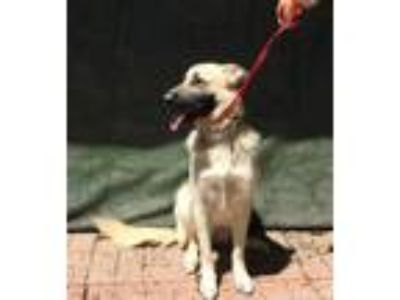 Adopt Tessa a German Shepherd Dog / Mixed Breed (Medium) / Mixed dog in Lemoore