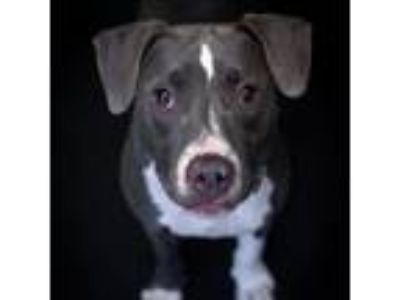 Adopt Blueberry a Mixed Breed