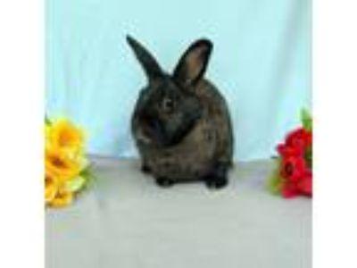 Adopt Pete a Bunny Rabbit