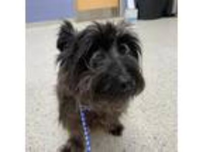Adopt Kevin a Black Terrier (Unknown Type, Medium) dog in Jacksonville