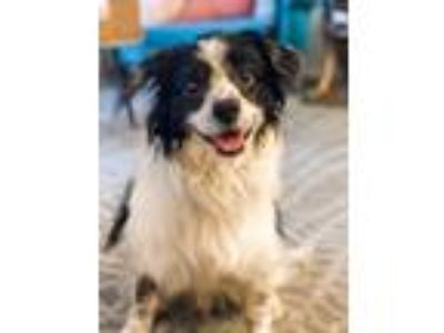 Adopt Hutch a Mixed Breed