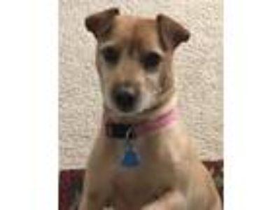 Adopt Zoey a Shar Pei / Terrier (Unknown Type, Medium) / Mixed dog in Orange