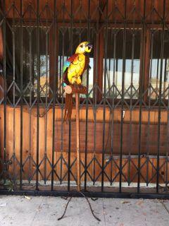 metal parrot floor stand