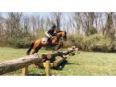 Perfect Pony Club packer Safe and Honest Eventer