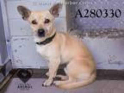 Adopt A280330 a Terrier, Mixed Breed