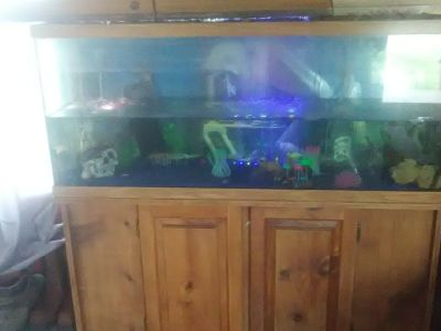 Large fish tank filters LED lights and fish included