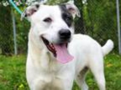 Adopt SAVE SAVANNAH a White - with Black Border Collie / Mixed dog in Spring