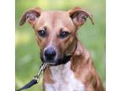 Adopt Flicker a Hound, Terrier