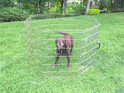 Pet Play Yard w/locking door, carry handle 36 tall (shown w/my lab for size) folds flat, 2 available, can be hooked together to make bigger
