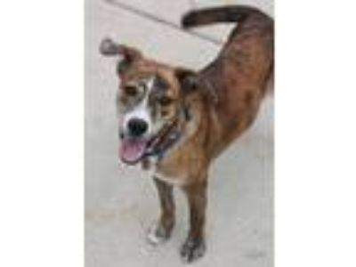 Adopt Andy a Hound, Boxer