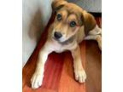 Adopt Barbie a Mixed Breed