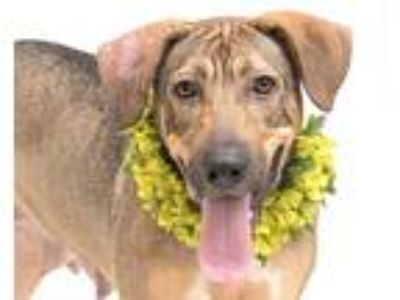 Adopt NALA a Tan/Yellow/Fawn German Shepherd Dog / Mixed dog in Orlando