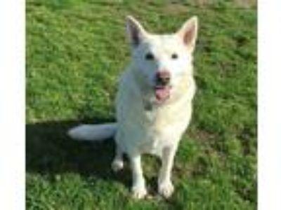 Adopt Hope a German Shepherd Dog / Mixed dog in Downey, CA (19884833)