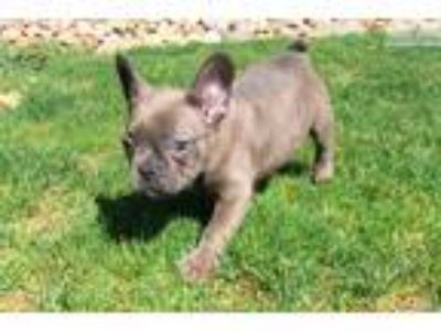 Puppy - For Sale Classified Ads in Industry, Ohio - Claz org