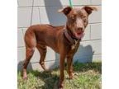Dogs for Adoption Classifieds in Lisbon, South Florida