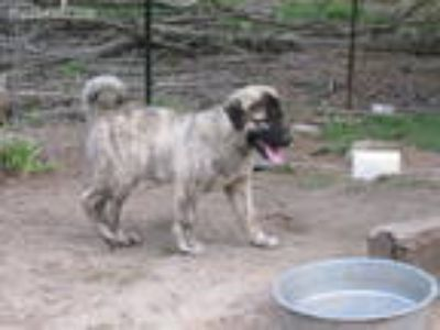 Puppy - Kingsport Classifieds - Claz org