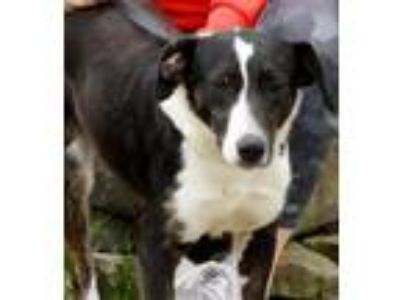 Adopt Claire a Pointer