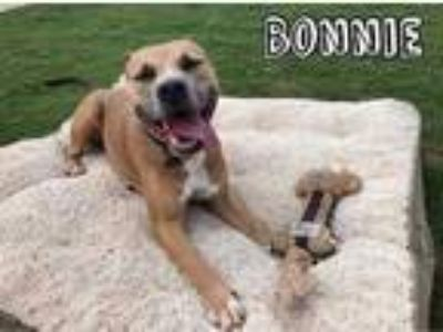 Adopt Bonnie a Tan/Yellow/Fawn American Pit Bull Terrier / Mixed dog in Cibolo