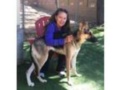 Adopt ZOEY a Black - with Tan, Yellow or Fawn German Shepherd Dog / Mixed dog in