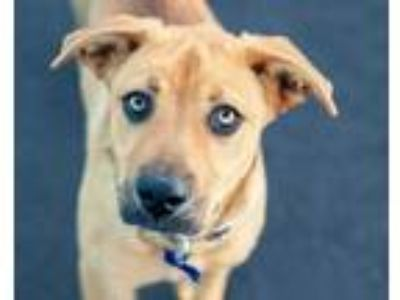 Adopt Eve a Black Mouth Cur