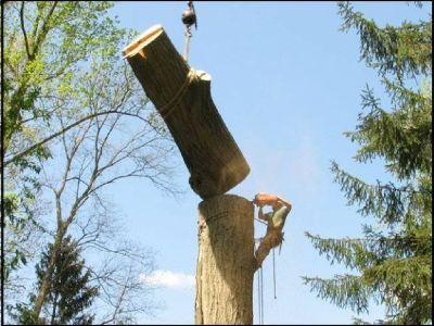 My Tree Man  TREE SERVICE Atlanta Ga. Visit mytreeman.com