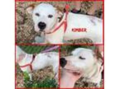 Adopt Kimber a Pointer