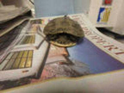 Adopt a Turtle - Other / Mixed reptile, amphibian, and/or fish in Van Nuys