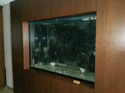 Big Aquarium for sell, 200 gallon