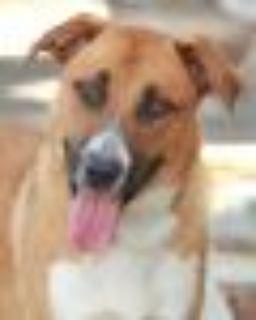 Spencer von Soest German Shepherd Dog Dog