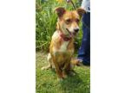 Puppy - Dogs for Adoption Classifieds in Burnsville, North Carolina
