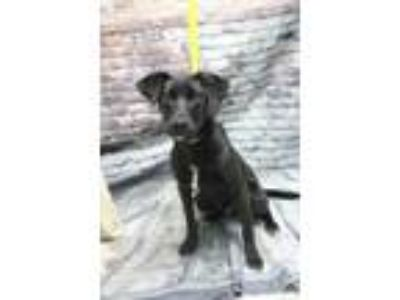 Adopt Murphy a Black Mixed Breed (Large) / Mixed dog in Covington, LA (24734089)