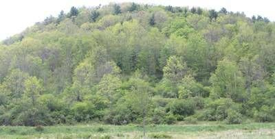 0 North Fork Road Westfield, Large wooded parcel of 106