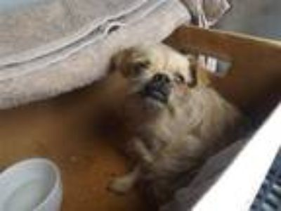 Adopt Marvin Surgery Suite a Terrier